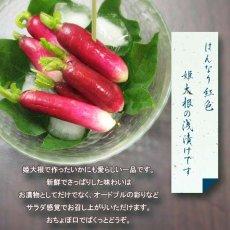 画像2: 京おちょぼ (姫大根浅漬) (2)